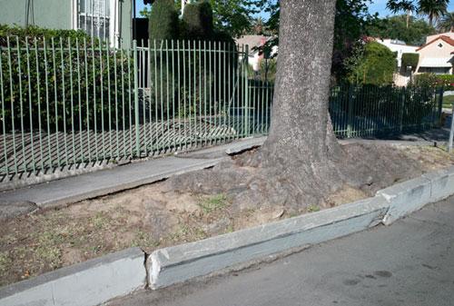 treeroot1
