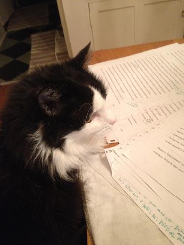 cat_editor