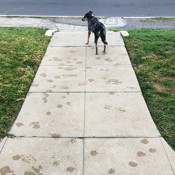rainy-sidewalk