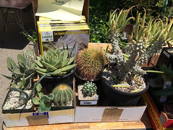 succulent-sale