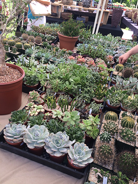 succulent_sale_goods