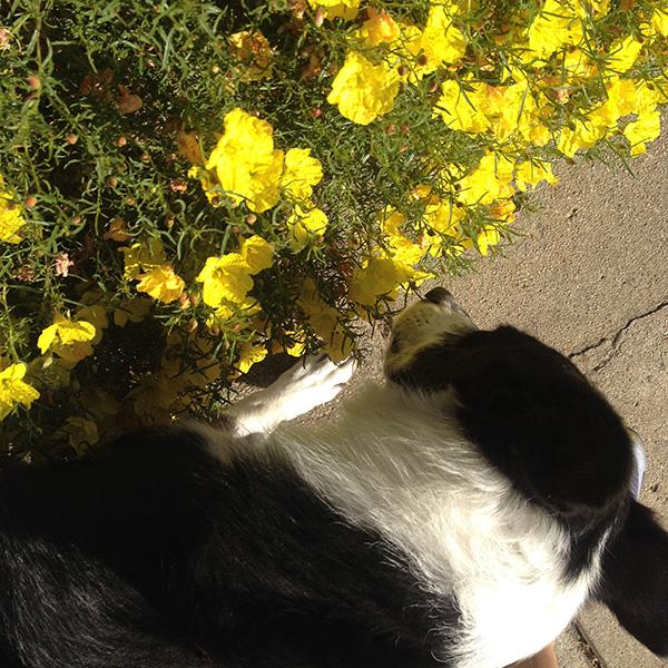 stevie-yellow-flowers